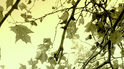 Foto di poetella
