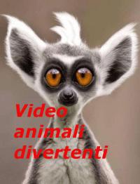 Video animali divertenti