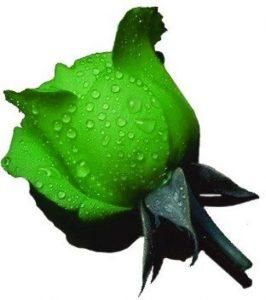 Le rose verdi del poeta