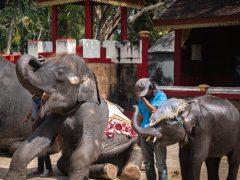 elefante dumbo1_19100112 (1)