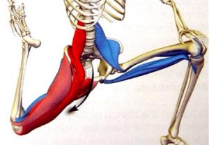 muscolo-ileopsoas