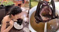 Coronavirus, ragazza mangia un pipistrello al ristorante, animale da cui si sospetta sia partita la malattia