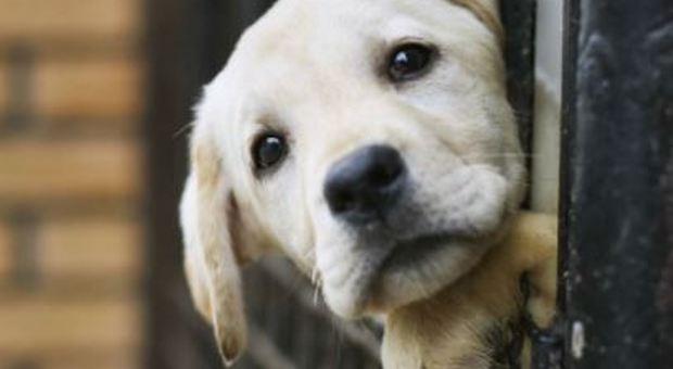 Adotti un cane? Il veterinario è gratis: in Puglia nuova legge per la tutela degli animali. «Libero accesso ovunque»