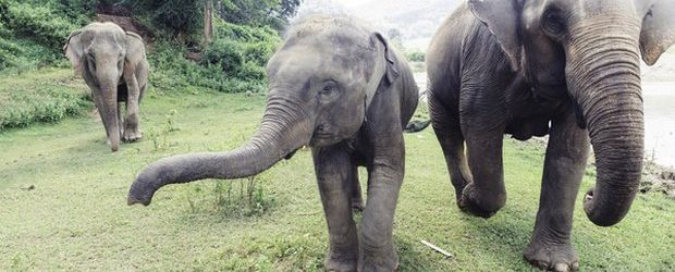 5792954_1136_elefante_uccide_lavoratore_zoo