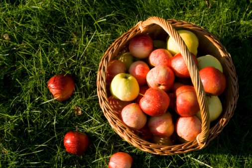 Basket with apples in afternoon sun.