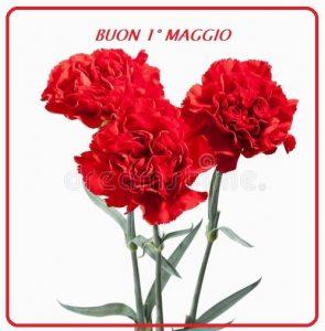 fiore-mazzo-rosso-dei-garofani-isolato-su-fondo-bianco-50278333