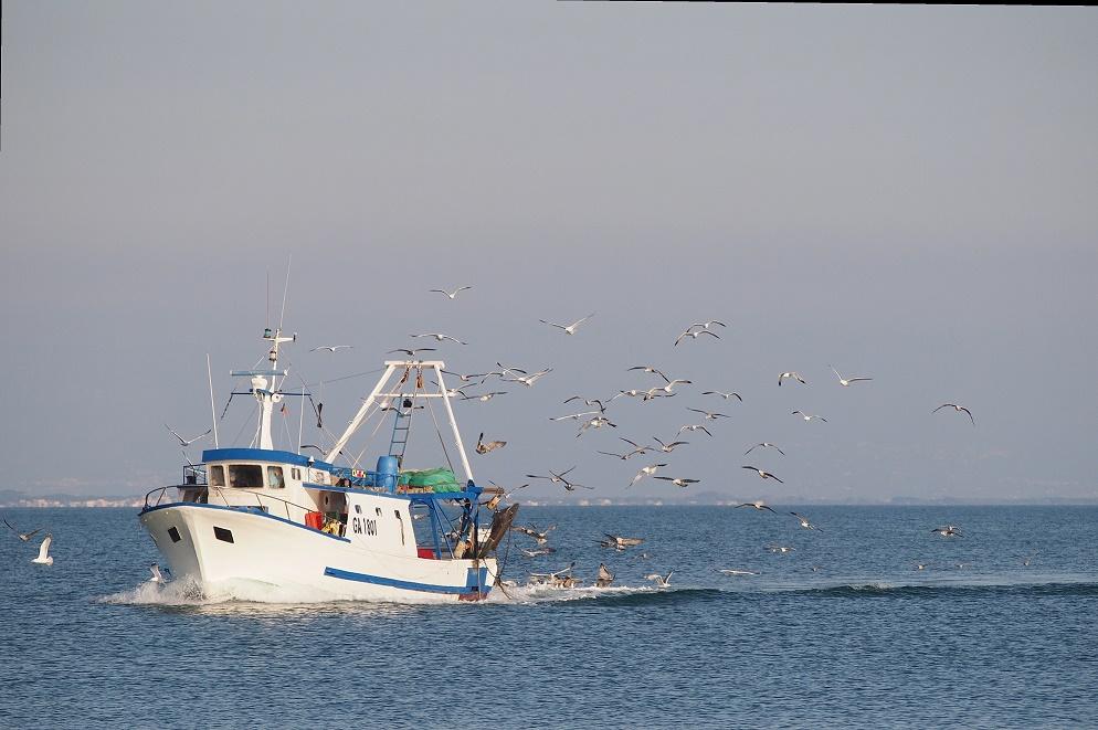 Il ritorno dei pescherecci