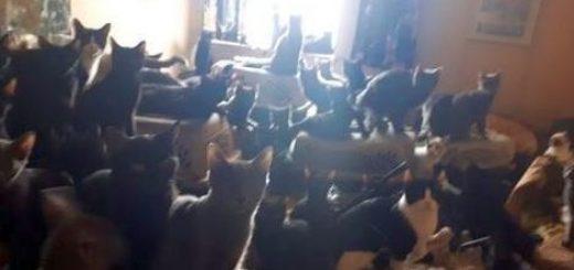 300 gatti-casa_07150014
