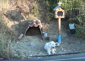 Il padrone muore in un incidente, il cane lo aspetta in quel punto da un anno e mezzo