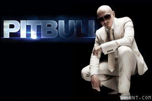 pitbull-1-tkhunt