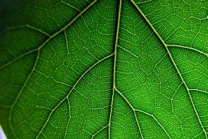 leaf-2602070_960_720
