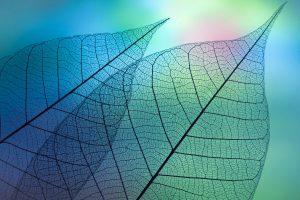 macro-foglie-trasparenti