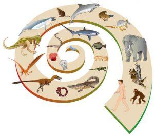 evoluzione-vita