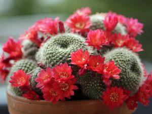 5_piante_grasse_da_fiore5.jpg_1041655378