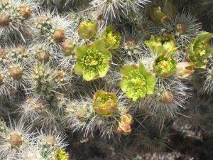 cactus-165477__340