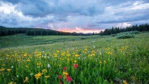 Perchè ci piace la bellezza di un paesaggio, perchè vivere nella natura ci fa  star bene?