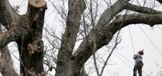 albero600_25202505