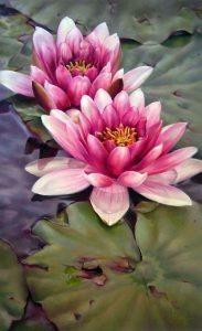 fiore 14