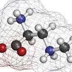 Amminoacidi: costituenti delle proteine fondamentali per la vita