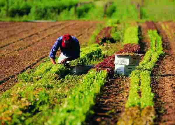 Produttori agricoli sempre più sfruttati: guadagnano 8 euro per ogni 100 spesi dai consumatori
