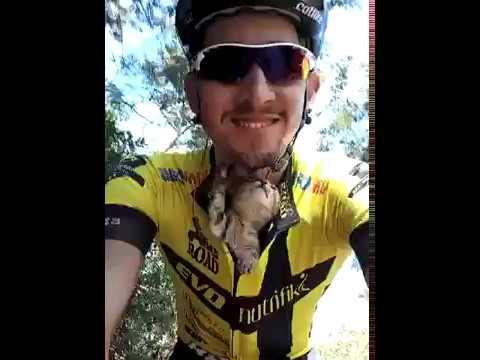 Il ciclista salva una gattina, lei lo ringrazia così