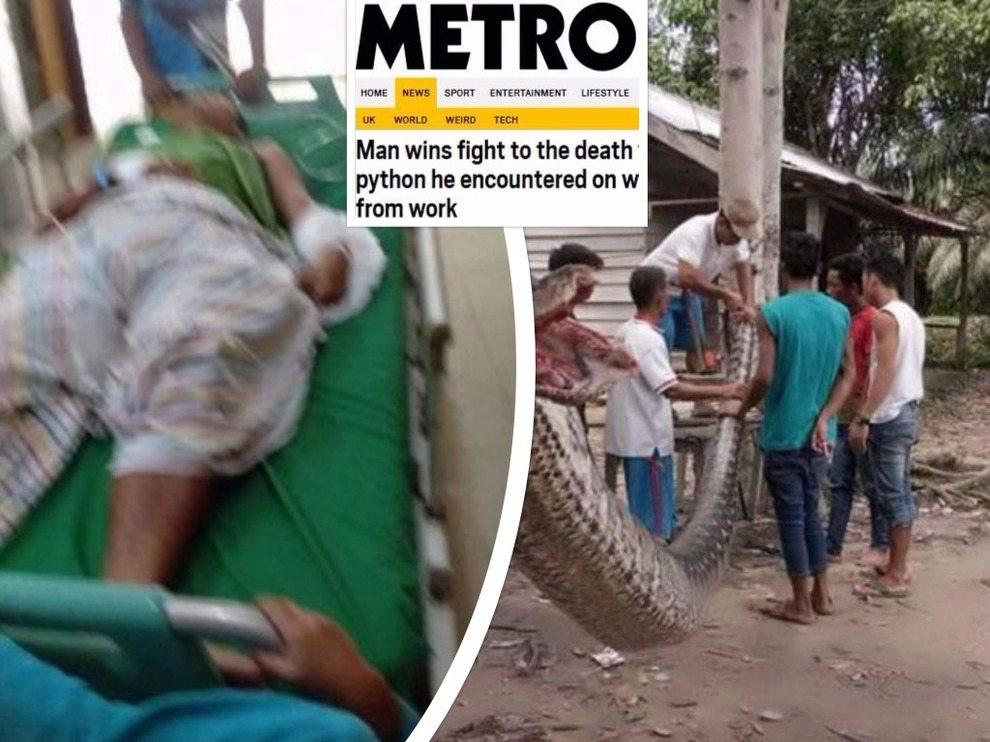 Aggredito da un pitone di 7 metri riesce ad ucciderlo e a sopravvivere: ecco cosa è successo
