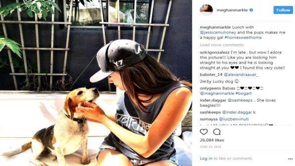 Dall'eutanasia a Windsor: la storia del beagle salvato dalla principessa