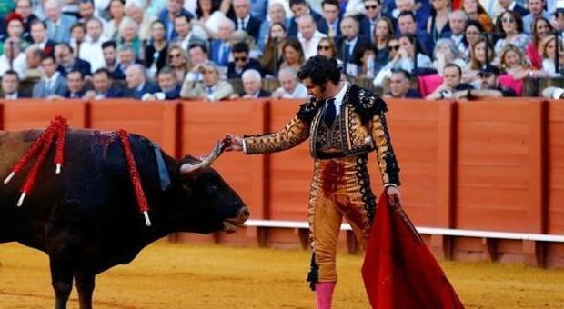 Torero asciuga le lacrime al toro poi lo uccide: «Solo una mente perversa fa così»