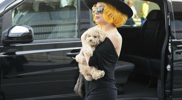 Lady Gaga, ritrovati i cani rapiti: la cantante aveva offerto 500 mila dollari di ricompensa