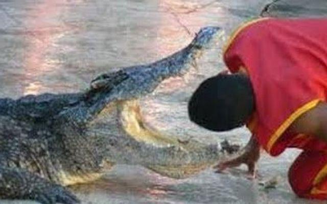 Incidente, Video coccodrillo morde domatore in testa 2