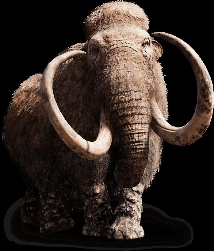 Presto un simil Mammut.Circuspage