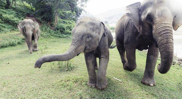 Elefante uccide un dipendente di uno zoo: «Lo ha colpito con la proboscide, scontro violentissimo»