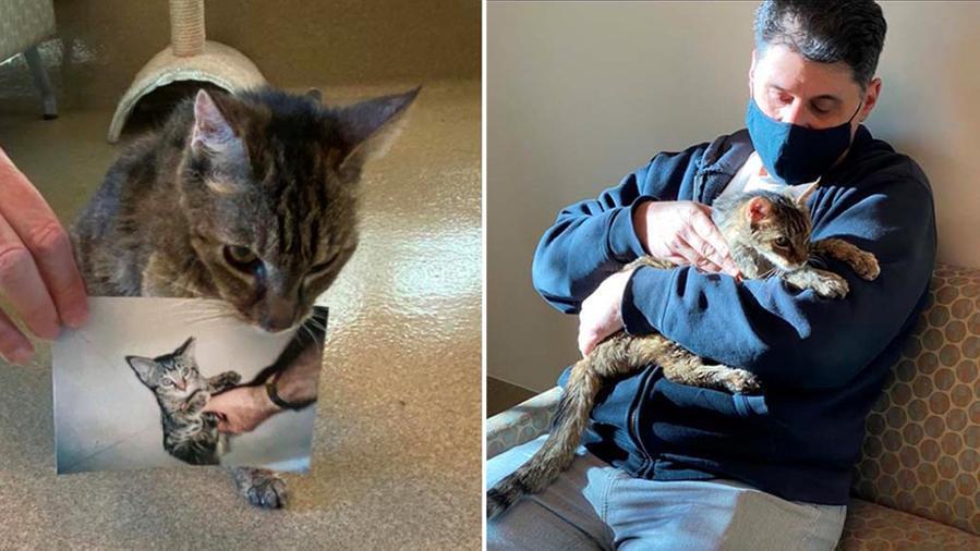 Ritrova la sua gatta dopo 15 anni, la storia incredibile: «L'ho presa in braccio e ha iniziato a fare le fusa»